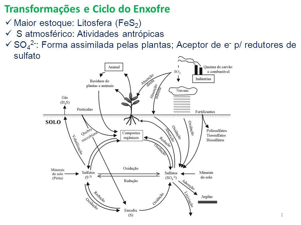 Transformações e Ciclo do Enxofre Maior estoque: Litosfera (FeS 2 ) S atmosférico: Atividades antrópicas SO 4 2- : Forma assimilada pelas plantas; Aceptor de e - p/ redutores de sulfato 2