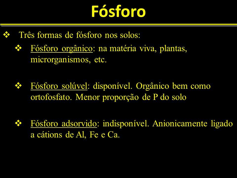 Perda de fósforo dos solos Perdas volumosas logo após fertilização orgânica (chuva) Perdas por erosão: P associado a partículas do solo Aração, transformação de ecossistemas florestais à agricultura, etc.