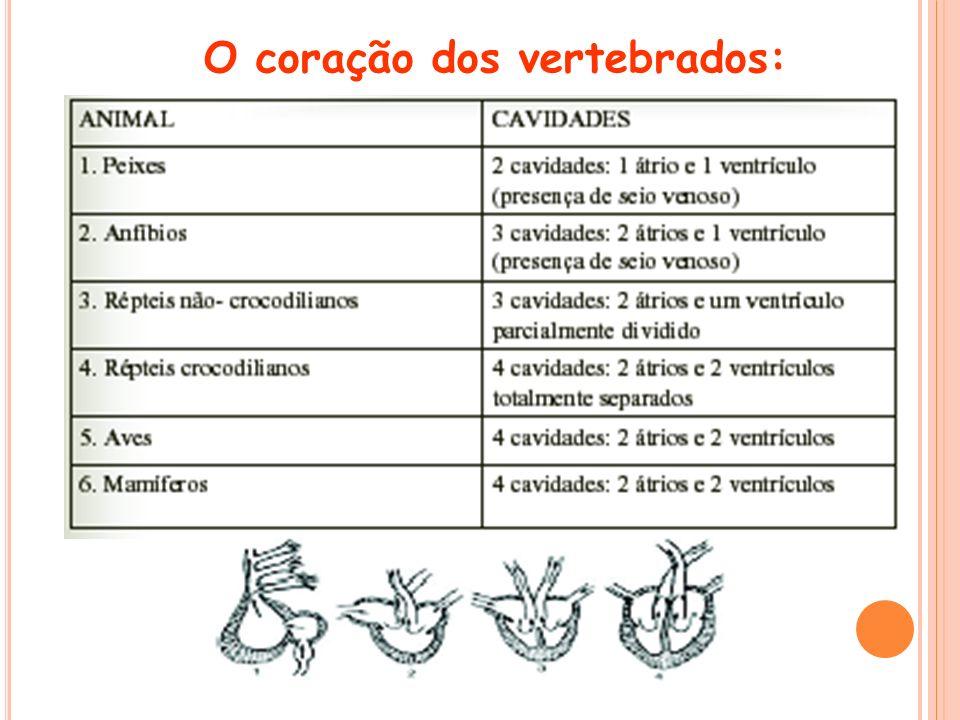 O coração dos vertebrados:
