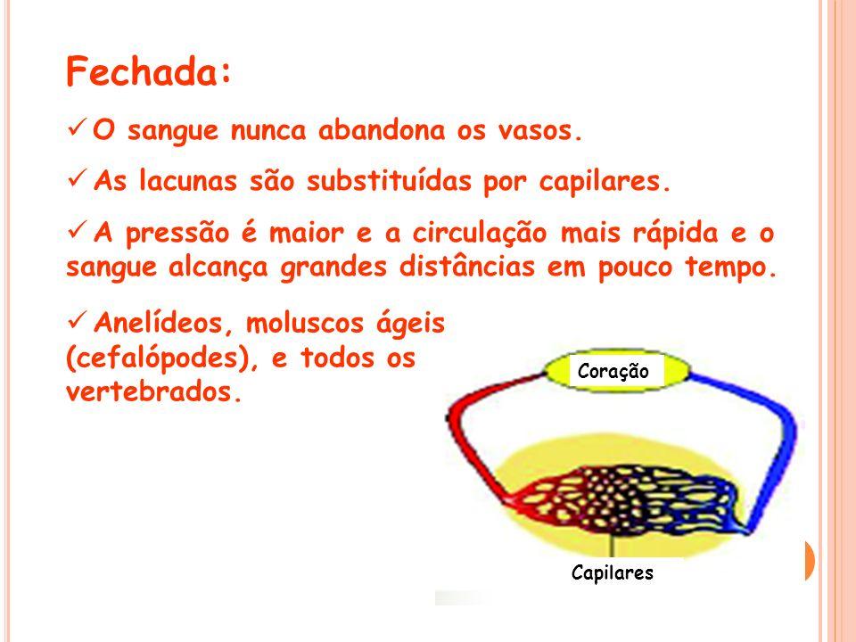 Fechada: O sangue nunca abandona os vasos. As lacunas são substituídas por capilares. A pressão é maior e a circulação mais rápida e o sangue alcança
