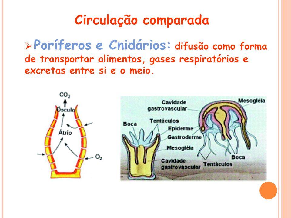 Poríferos e Cnidários: difusão como forma de transportar alimentos, gases respiratórios e excretas entre si e o meio. Circulação comparada