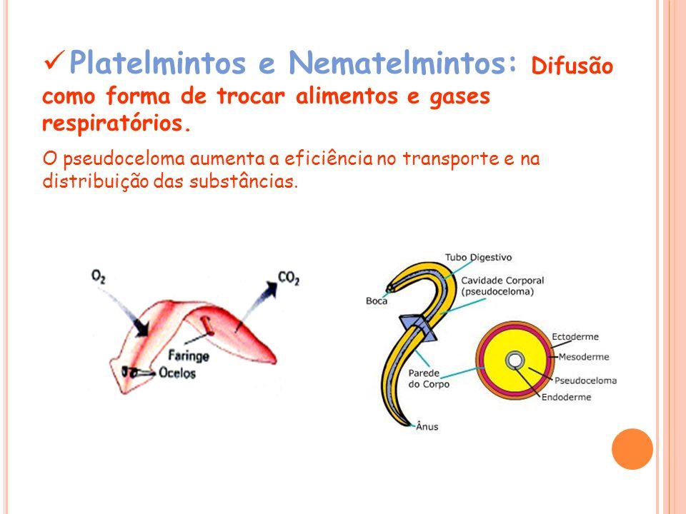 Platelmintos e Nematelmintos: Difusão como forma de trocar alimentos e gases respiratórios. O pseudoceloma aumenta a eficiência no transporte e na dis