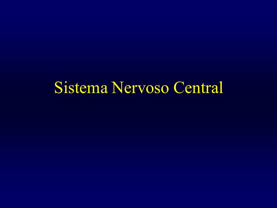 SISTEMA NERVOSO O sistema nervoso capacita o organismo a perceber as variações do meio (interno e externo), a difundir as modificações que essas variações produzem e a executar as respostas adequadas para que seja mantido o equilíbrio interno do corpo (homeostase).