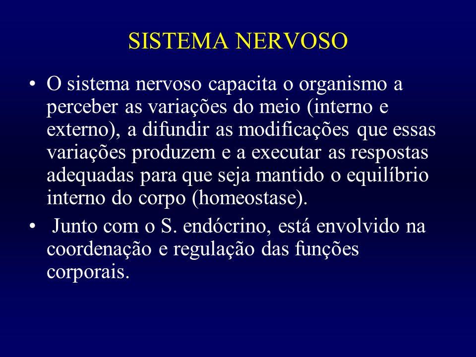 SISTEMA NERVOSO O sistema nervoso capacita o organismo a perceber as variações do meio (interno e externo), a difundir as modificações que essas varia