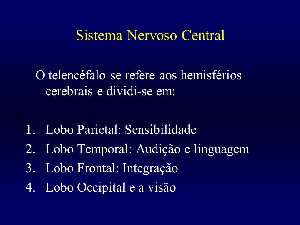 Sistema Nervoso Central O telencéfalo se refere aos hemisférios cerebrais e dividi-se em: 1.Lobo Parietal: Sensibilidade 2.Lobo Temporal: Audição e li