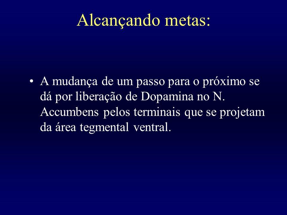 Alcançando metas: A mudança de um passo para o próximo se dá por liberação de Dopamina no N. Accumbens pelos terminais que se projetam da área tegment