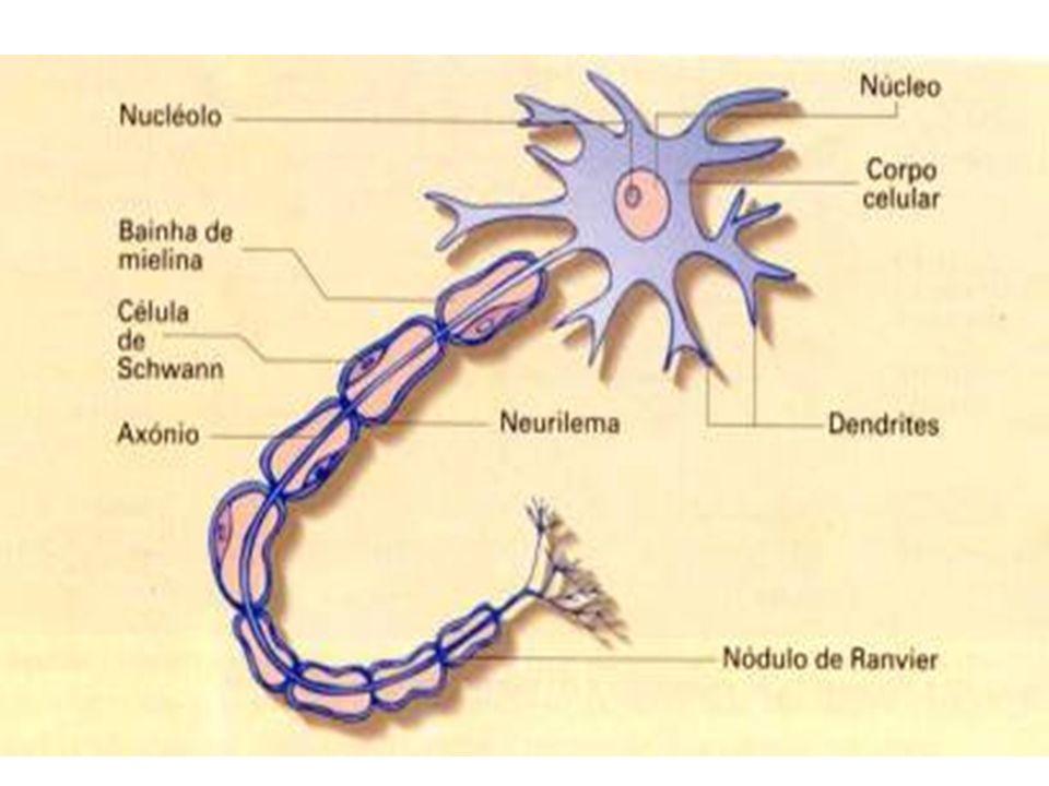 Dopamina Neurotransmissor derivado da tirosina.