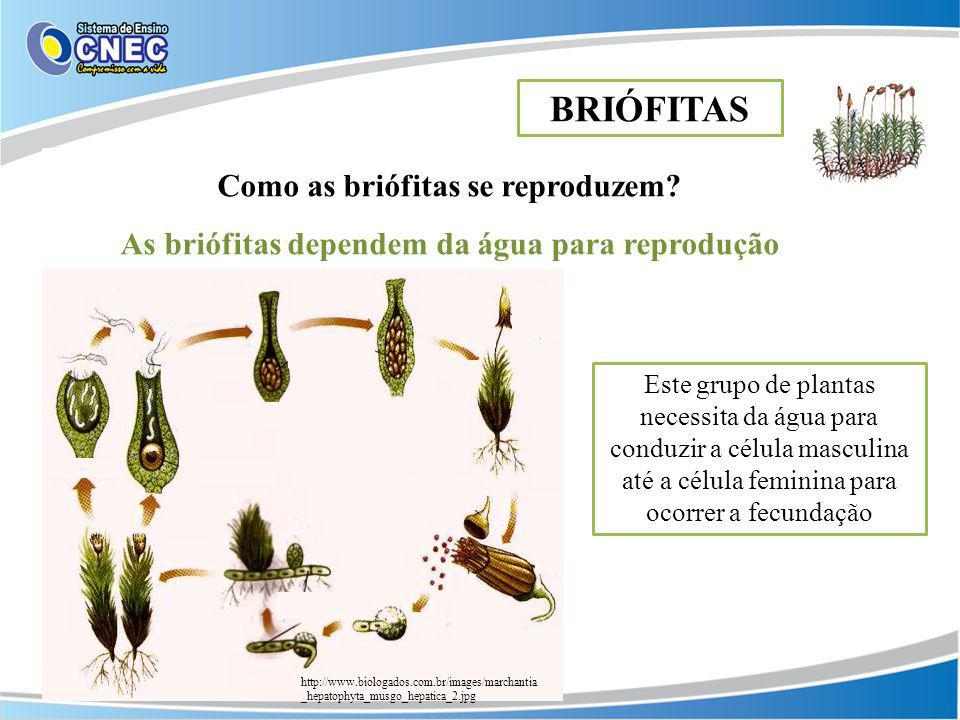 Como as briófitas se reproduzem? As briófitas dependem da água para reprodução BRIÓFITAS http://www.biologados.com.br/images/marchantia _hepatophyta_m