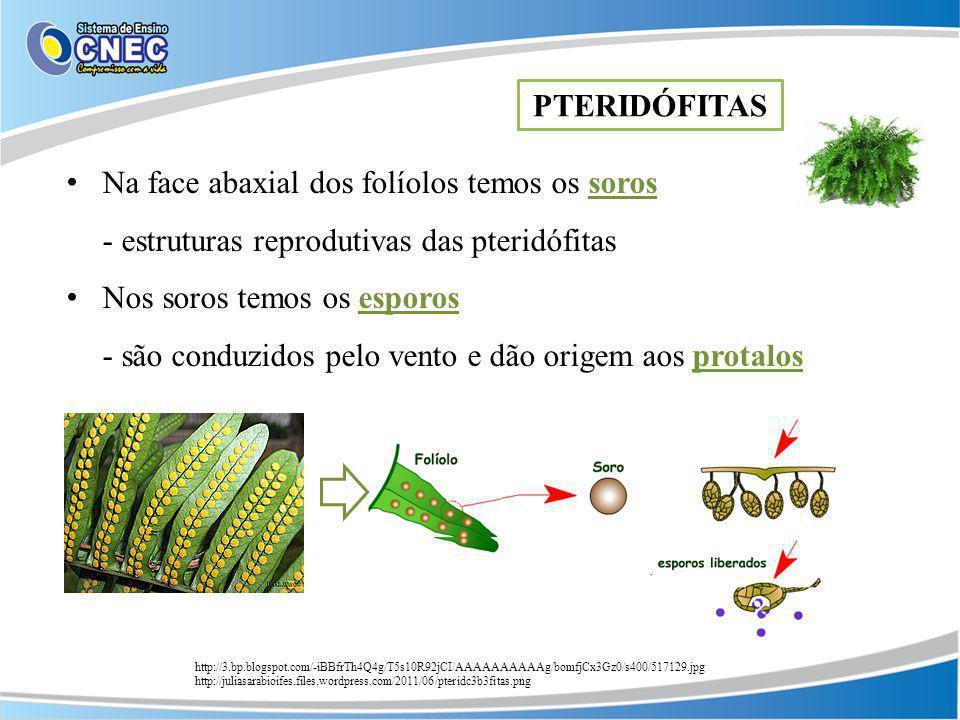 Na face abaxial dos folíolos temos os soros - estruturas reprodutivas das pteridófitas Nos soros temos os esporos - são conduzidos pelo vento e dão or