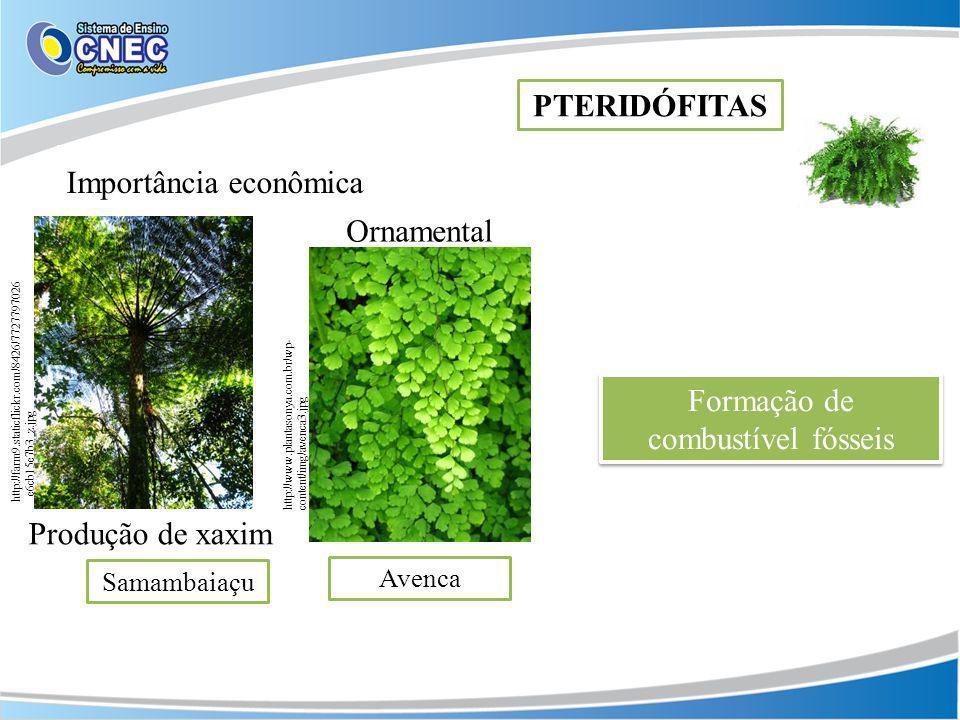 Produção de xaxim Importância econômica PTERIDÓFITAS http://farm9.staticflickr.com/8426/7727797026 _e6cb15e7b3_z.jpg Ornamental Formação de combustíve