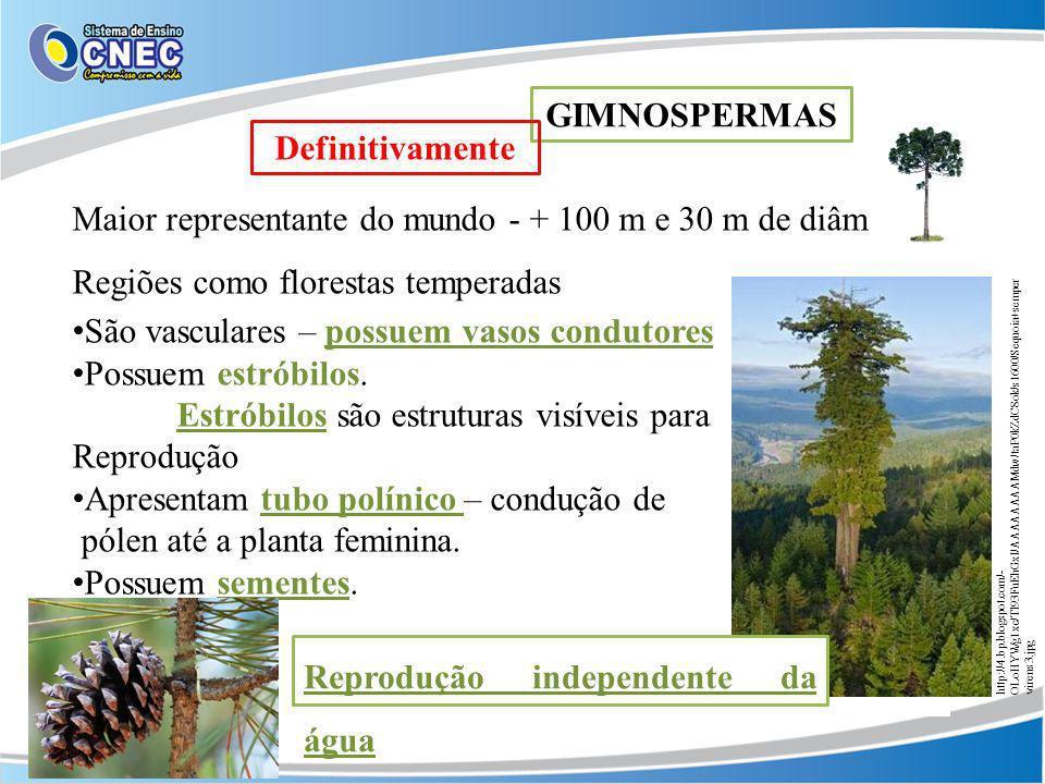 Maior representante do mundo - + 100 m e 30 m de diâm. Regiões como florestas temperadas São vasculares – possuem vasos condutores Possuem estróbilos.