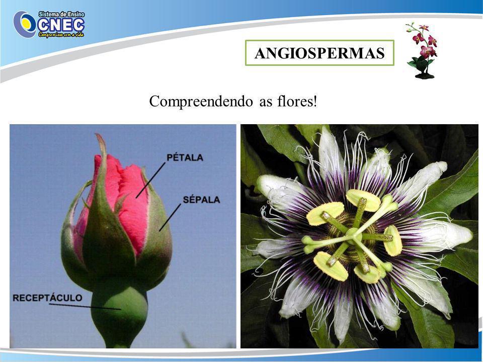 ANGIOSPERMAS Compreendendo as flores!