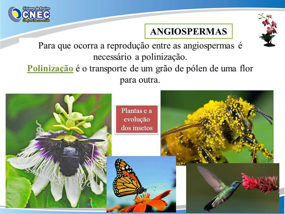 Para que ocorra a reprodução entre as angiospermas é necessário a polinização. Polinização é o transporte de um grão de pólen de uma flor para outra.