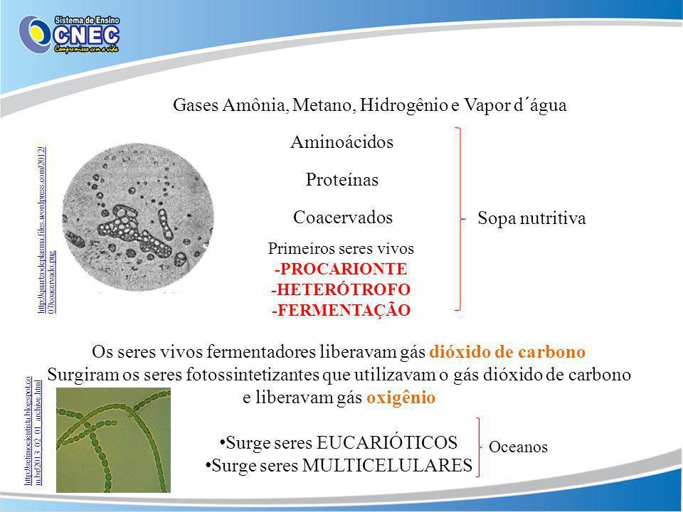 Os seres vivos fermentadores liberavam gás dióxido de carbono Surgiram os seres fotossintetizantes que utilizavam o gás dióxido de carbono e liberavam