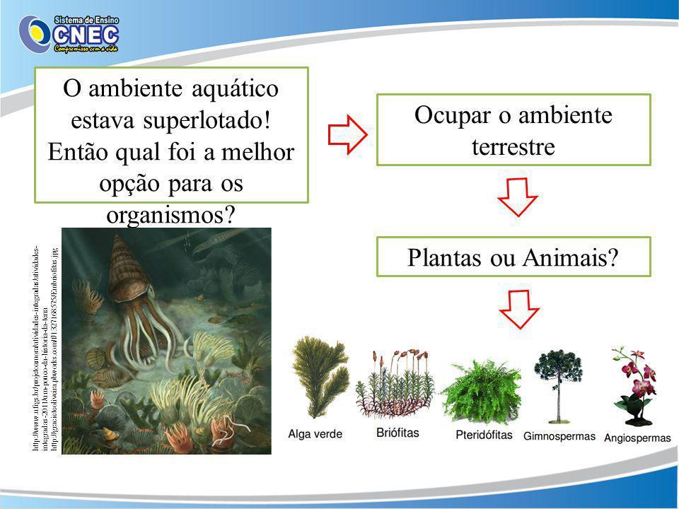 O ambiente aquático estava superlotado! Então qual foi a melhor opção para os organismos? Ocupar o ambiente terrestre Plantas ou Animais? http://www.u