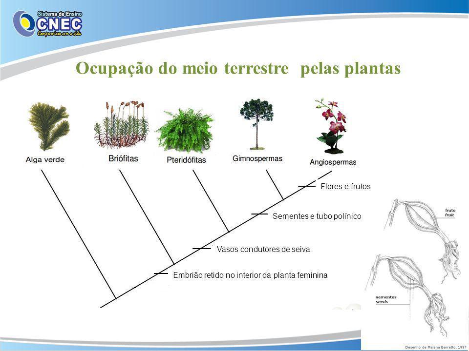 Ocupação do meio terrestre pelas plantas Embrião retido no interior da planta feminina Vasos condutores de seiva Sementes e tubo polínico Flores e fru