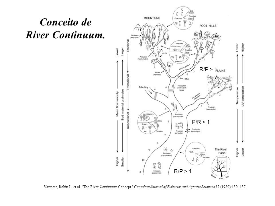 Conceito de River Continuum. Vannote, Robin L. et al.