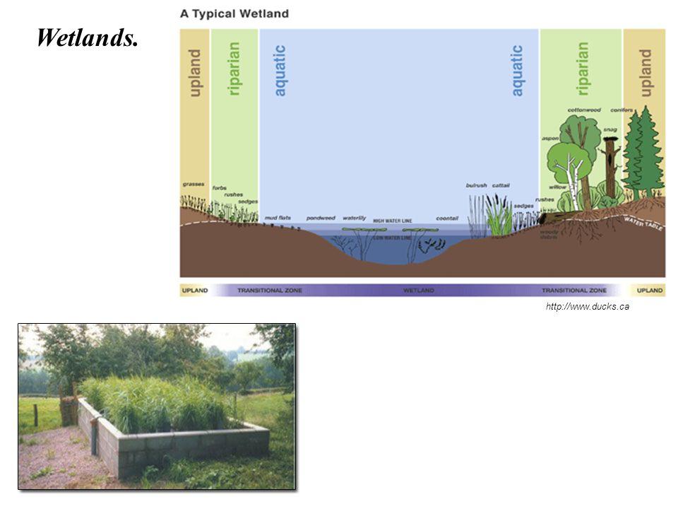 http://www.ducks.ca Wetlands.