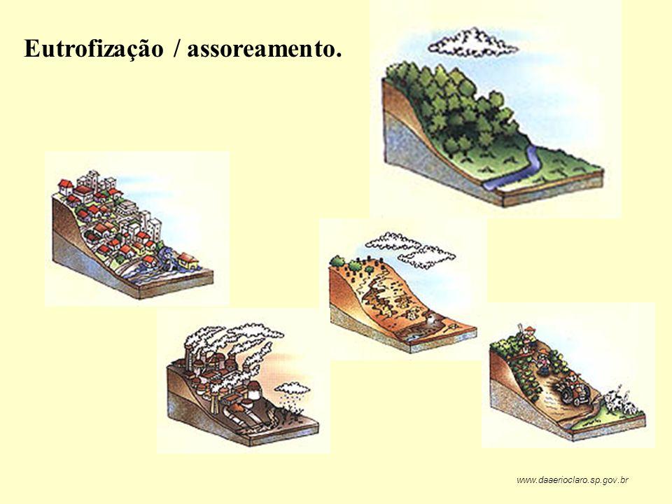Eutrofização / assoreamento. www.daaerioclaro.sp.gov.br