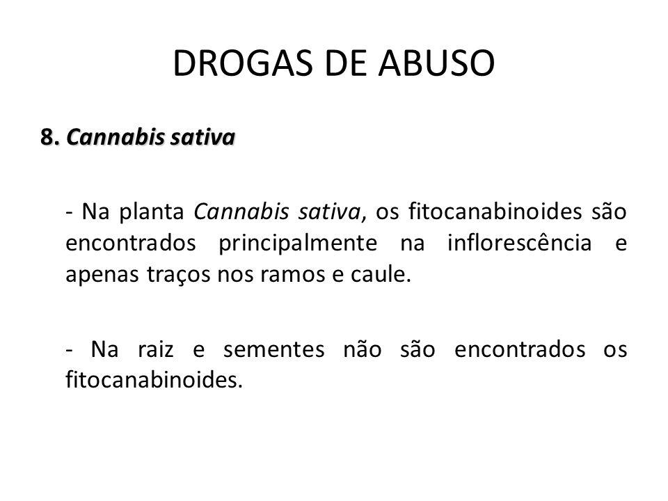 8. Cannabis sativa - Na planta Cannabis sativa, os fitocanabinoides são encontrados principalmente na inflorescência e apenas traços nos ramos e caule