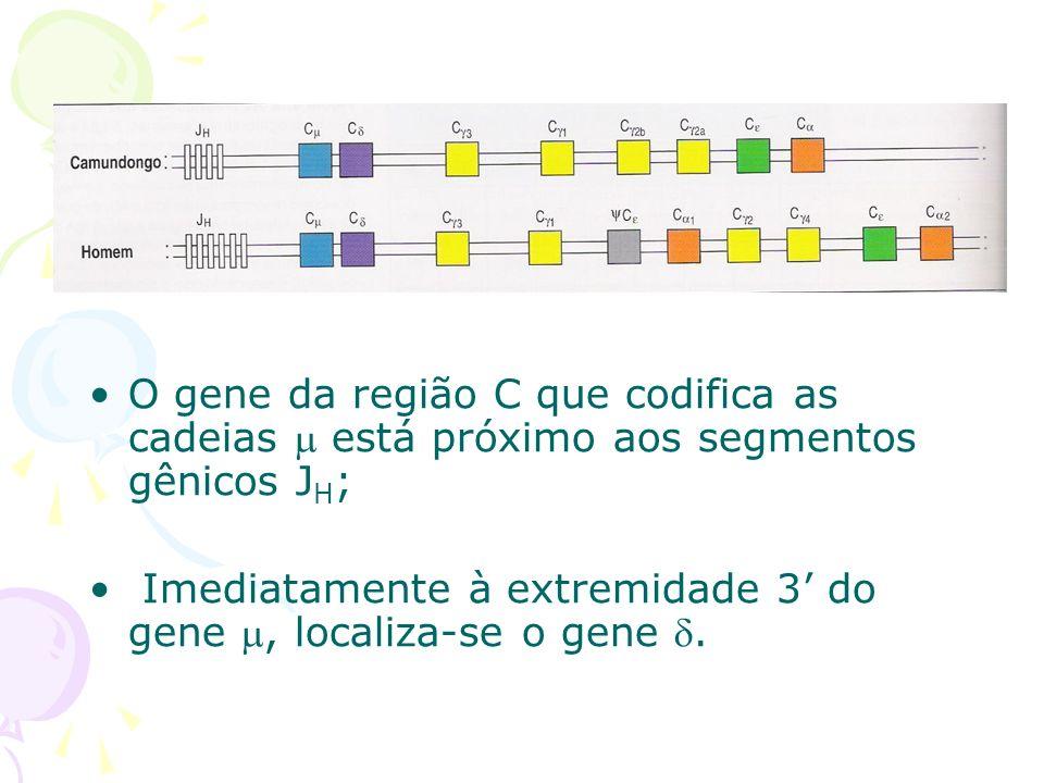 A co-expressão de IgD e IgM é regulada pelo processamento de RNA.