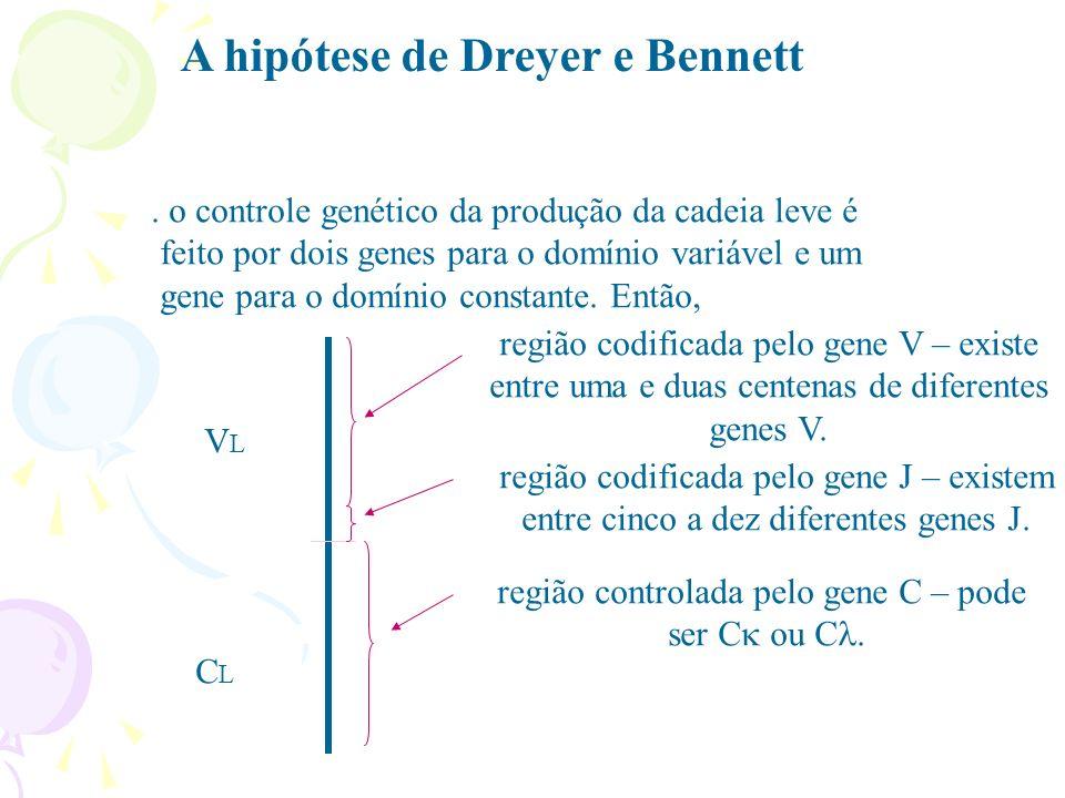 O truque por trás da diversidade é a escolha de três segmentos de gene para formar o gene final, a partir de três conjuntos de segmentos, cada um com múltiplas opções de escolha.