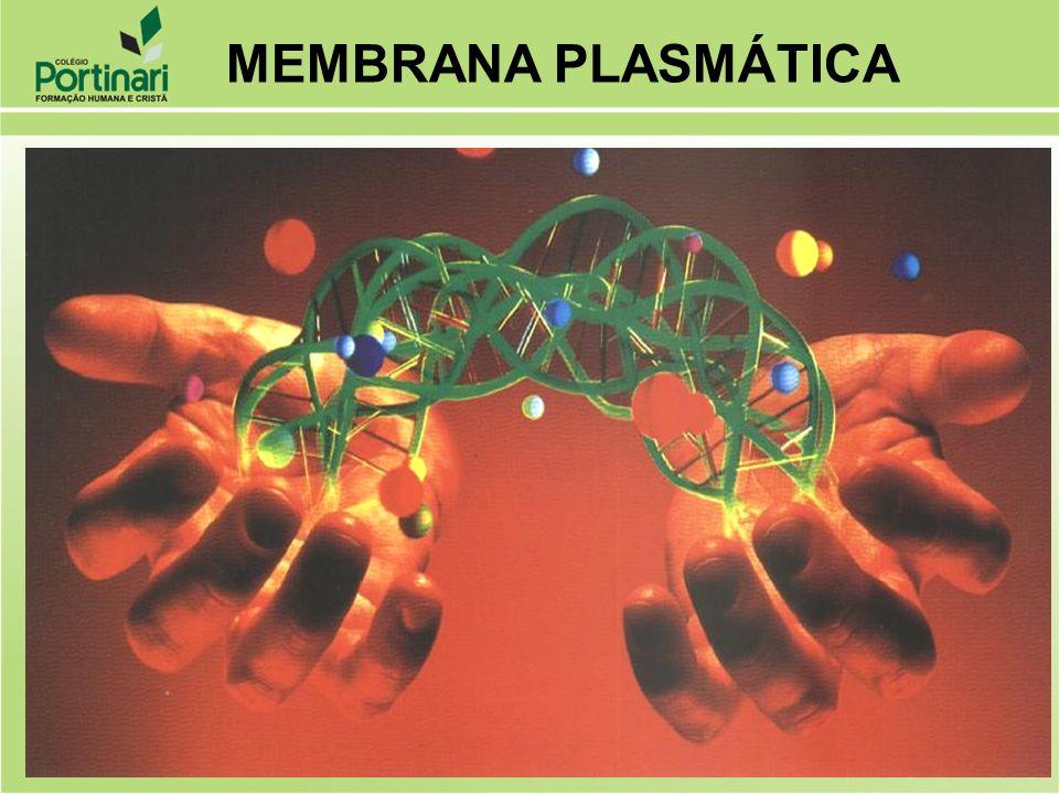 Funções Proteção Permeabilidade Seletiva Composição Química Lipídeos Proteínas Propriedades Elasticidade Regeneração MEMBRANA PLASMÁTICA