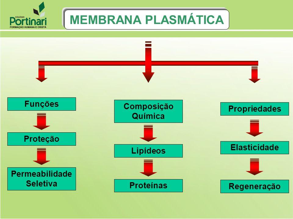 Proteínas Lipídeos O MODELO DA MEMBRANA PLASMÁTICA É DENOMINADO MOSAICO FLUÍDO PORQUE AS MOLÉCULAS DE PROTEÍNAS NÃO ESTÃO FIXAS E SIM MERGU- LHADAS ENTRE AS MOLÉCULAS DE FOSFOLIPIDIOS.