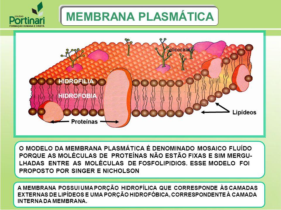 MEMBRANA PLASMÁTICA Canal de pinocitose Partícula líquida pinossomo PINOCITOSE: É O ENGLOBAMENTO DE PARTÍCULAS LÍQUIDAS PELA CÉLULA A PARTÍCULA ENGLOBADA SERÁ, POSTERIORMENTE, DIGERIDA PELOS LISOSSOMOS