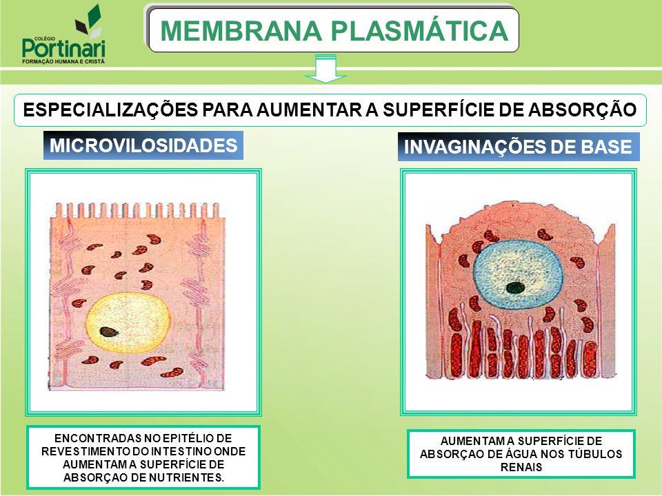 Meio extracelular Desmossomo Interdigitação Desmossomo MEMBRANA PLASMÁTICA DESMOSSOMOS E INTERDIGITAÇÕES SÃO ENCONTRADOS NO TECIDO EPITELIAL DE REVESTIMENTO.