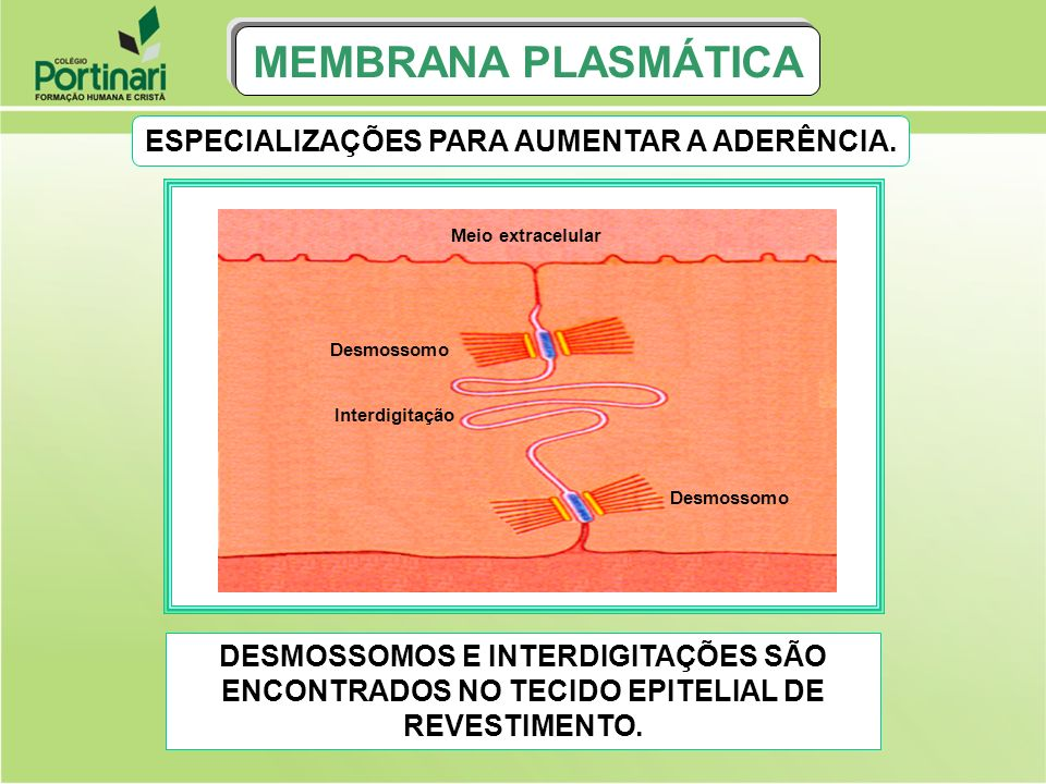 MEMBRANA PLASMÁTICA RESÍDUOS Vacúolo resídual CLASMOCITOSE: É A ELIMINAÇÃO DE RESÍDUOS DA DIGESTÃO CELULAR