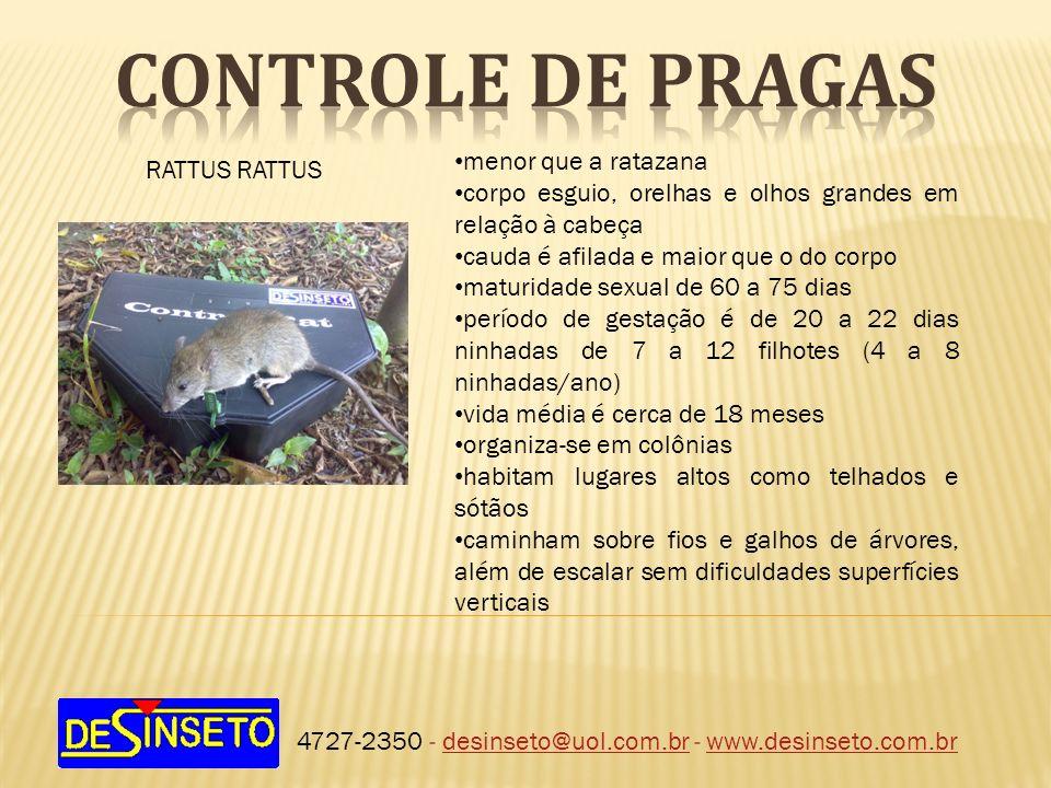 4727-2350 - desinseto@uol.com.br - www.desinseto.com.brdesinseto@uol.com.brwww.desinseto.com.br RATTUS menor que a ratazana corpo esguio, orelhas e ol