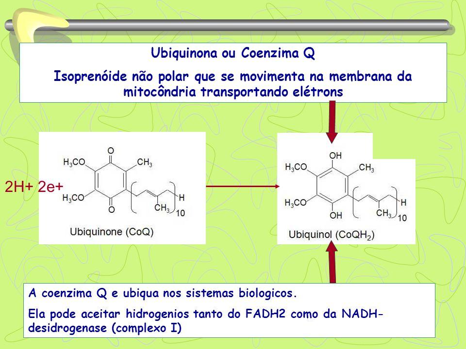 Ubiquinona ou Coenzima Q Isoprenóide não polar que se movimenta na membrana da mitocôndria transportando elétrons 2H+ 2e+ A coenzima Q e ubiqua nos si
