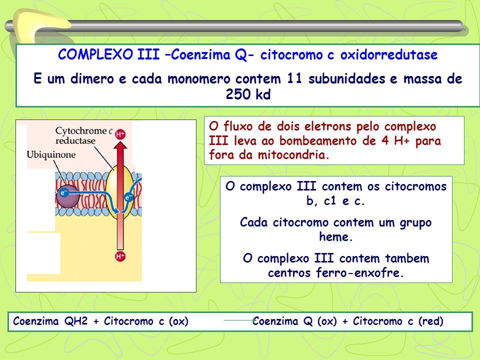 COMPLEXO III –Coenzima Q- citocromo c oxidorredutase E um dimero e cada monomero contem 11 subunidades e massa de 250 kd Coenzima QH2 + Citocromo c (o