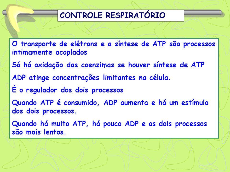 CONTROLE RESPIRATÓRIO O transporte de elétrons e a síntese de ATP são processos intimamente acoplados Só há oxidação das coenzimas se houver síntese d