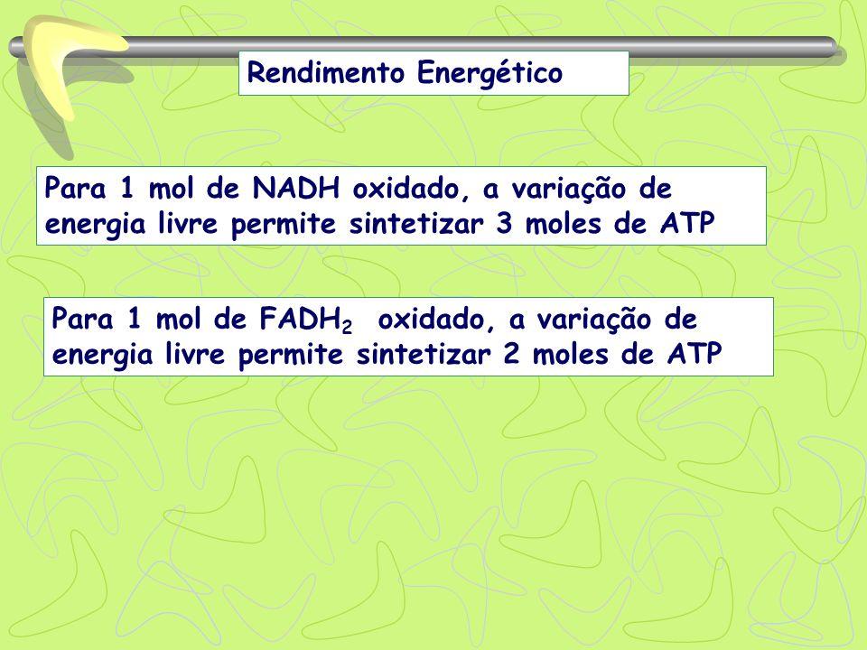 Rendimento Energético Para 1 mol de NADH oxidado, a variação de energia livre permite sintetizar 3 moles de ATP Para 1 mol de FADH 2 oxidado, a variaç