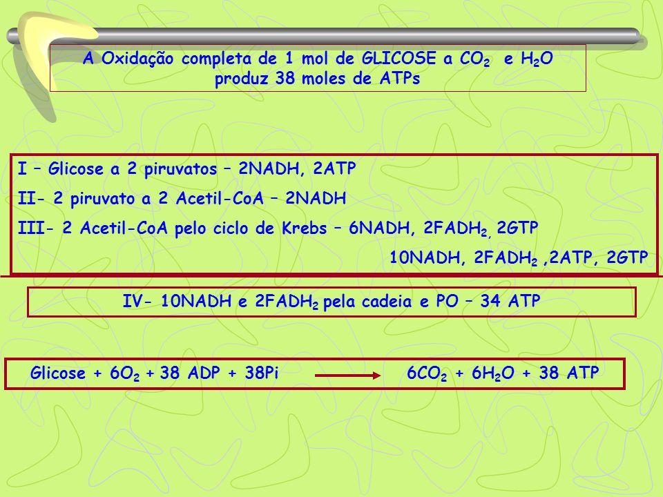 A Oxidação completa de 1 mol de GLICOSE a CO 2 e H 2 O produz 38 moles de ATPs IV- 10NADH e 2FADH 2 pela cadeia e PO – 34 ATP I – Glicose a 2 piruvato