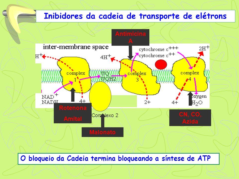 Complexo 2 Inibidores da cadeia de transporte de elétrons Rotenona Amital Malonato Antimicina A CN, CO, Azida O bloqueio da Cadeia termina bloqueando