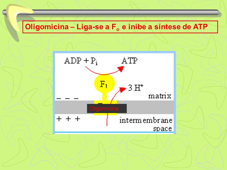 Oligomicina – Liga-se a F o e inibe a síntese de ATP Oligomicina