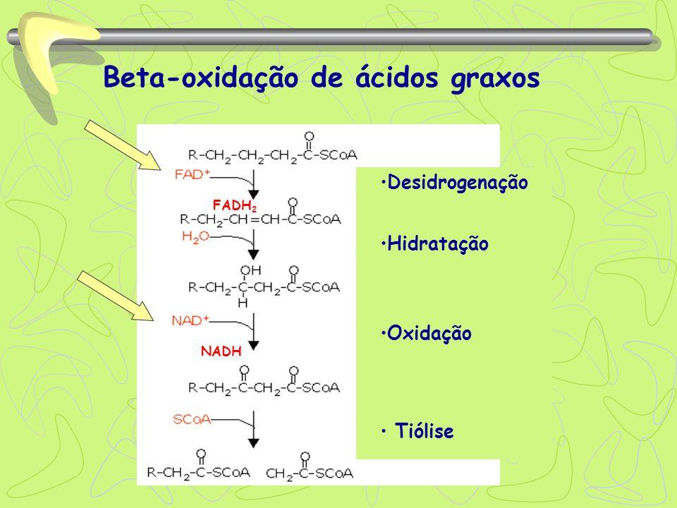 Beta-oxidação de ácidos graxos Tiólise Desidrogenação Hidratação Oxidação FADH 2 NADH