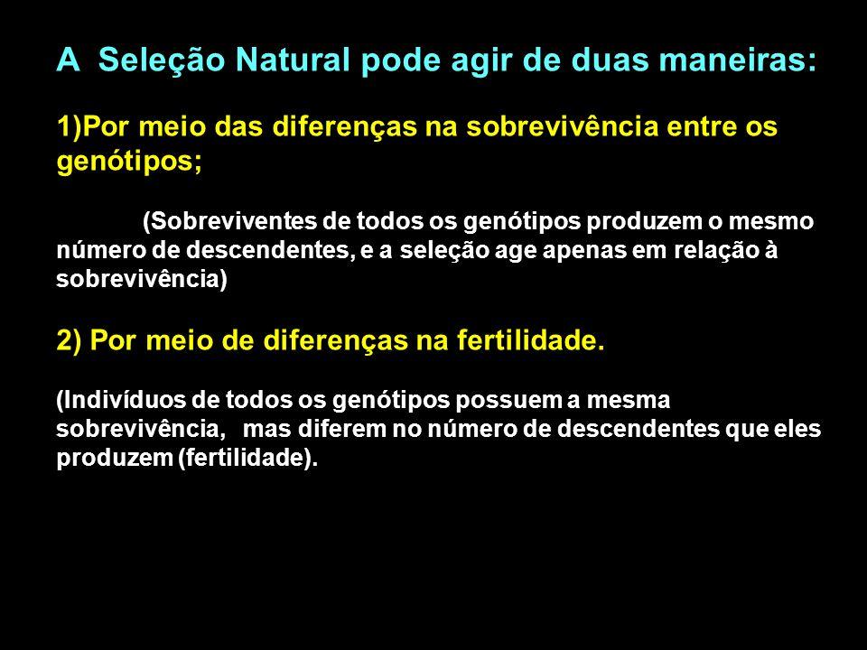 A Seleção Natural pode agir de duas maneiras: 1)Por meio das diferenças na sobrevivência entre os genótipos; (Sobreviventes de todos os genótipos prod