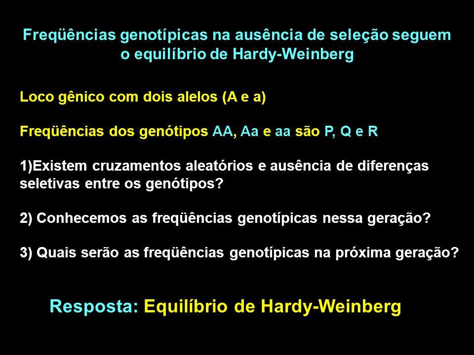 Freqüências genotípicas na ausência de seleção seguem o equilíbrio de Hardy-Weinberg Loco gênico com dois alelos (A e a) Freqüências dos genótipos AA, Aa e aa são P, Q e R 1)Existem cruzamentos aleatórios e ausência de diferenças seletivas entre os genótipos.