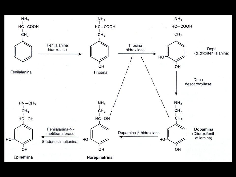 Dopamina Tem como função a atividade estimulante do sistema nervoso central.