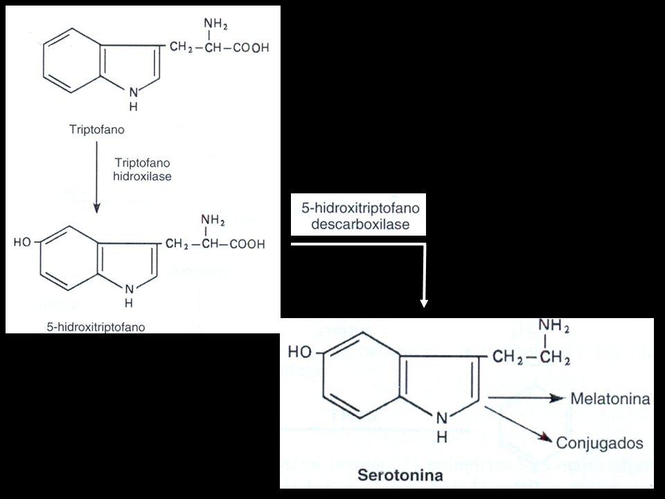 Serotonina Estimula a liberação de alguns hormônios, a regulação do sono, da temperatura corporal, do apetite, do humor, da atividade motora e das funções cognitivas.