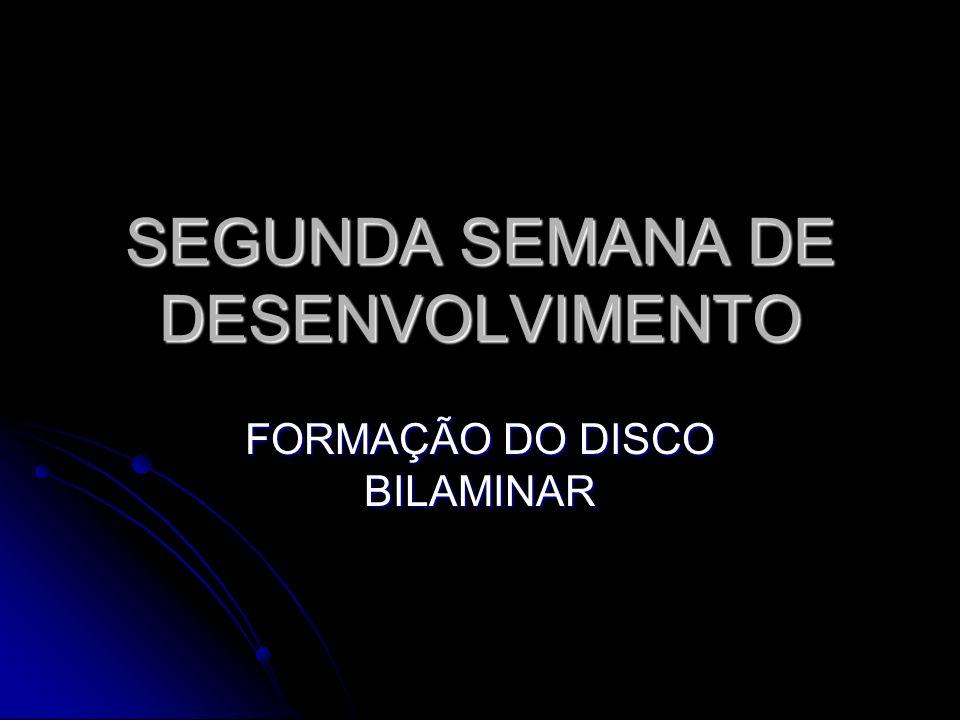 SEGUNDA SEMANA DE DESENVOLVIMENTO FORMAÇÃO DO DISCO BILAMINAR