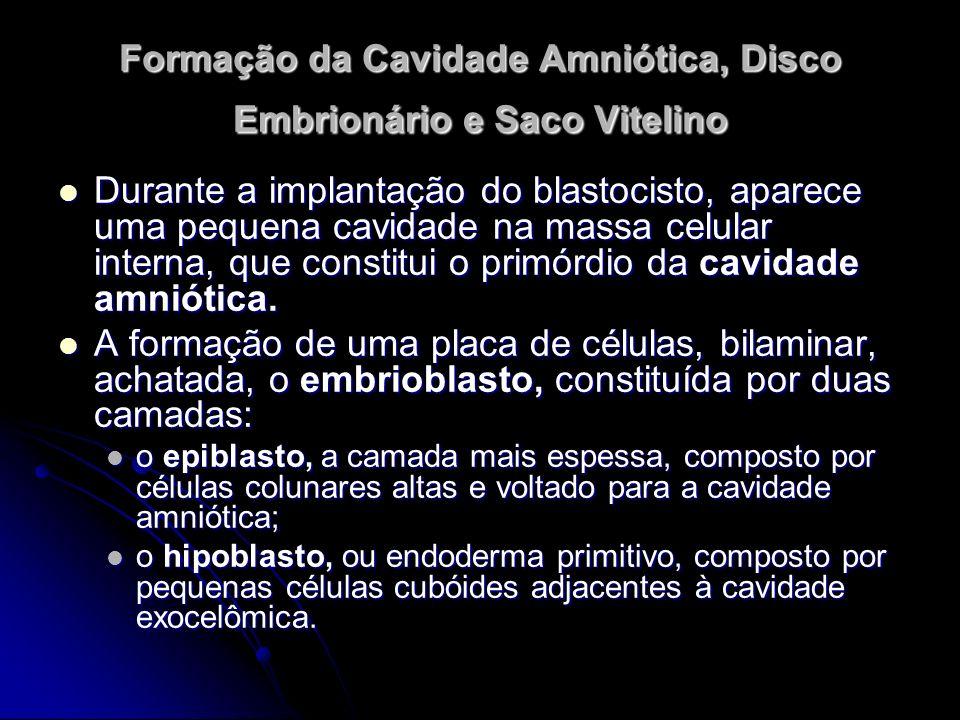 Formação da Cavidade Amniótica, Disco Embrionário e Saco Vitelino Durante a implantação do blastocisto, aparece uma pequena cavidade na massa celular