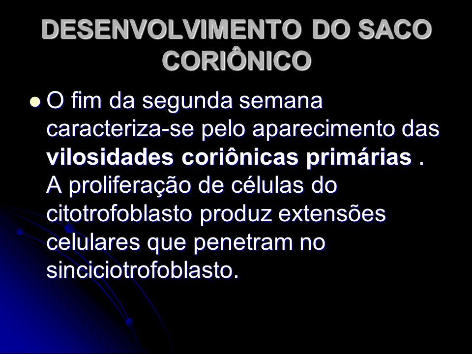 DESENVOLVIMENTO DO SACO CORIÔNICO O fim da segunda semana caracteriza-se pelo aparecimento das vilosidades coriônicas primárias. A proliferação de cél