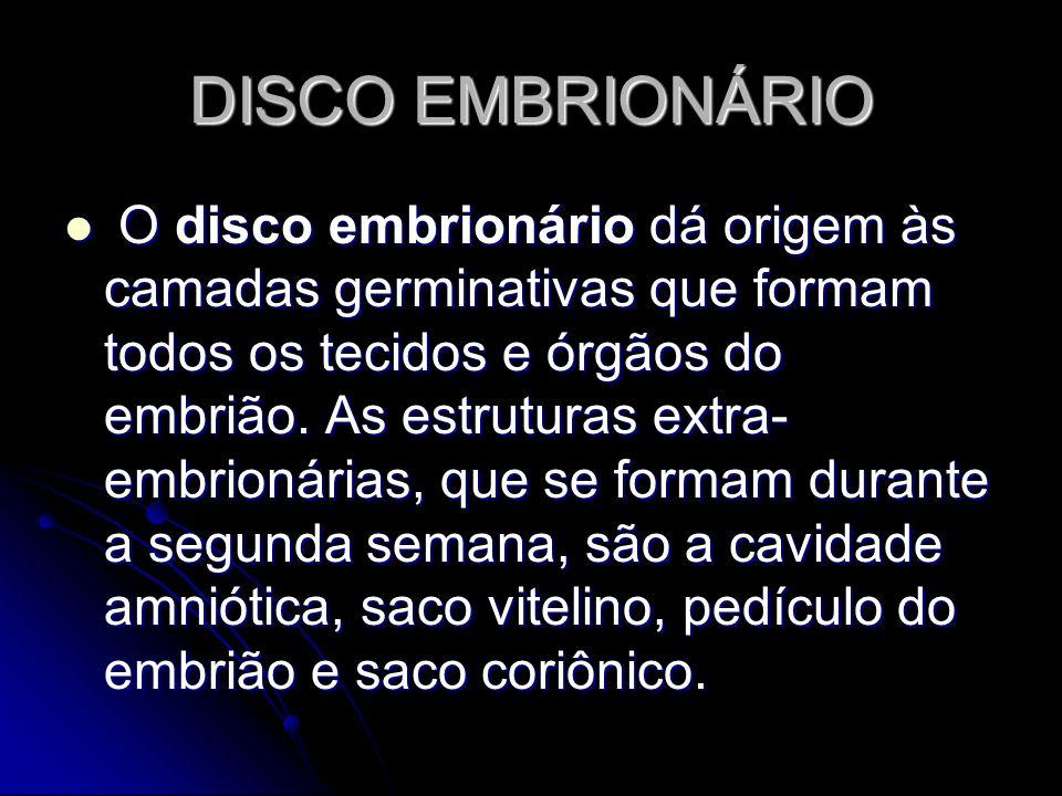 DISCO EMBRIONÁRIO O disco embrionário dá origem às camadas germinativas que formam todos os tecidos e órgãos do embrião. As estruturas extra- embrioná