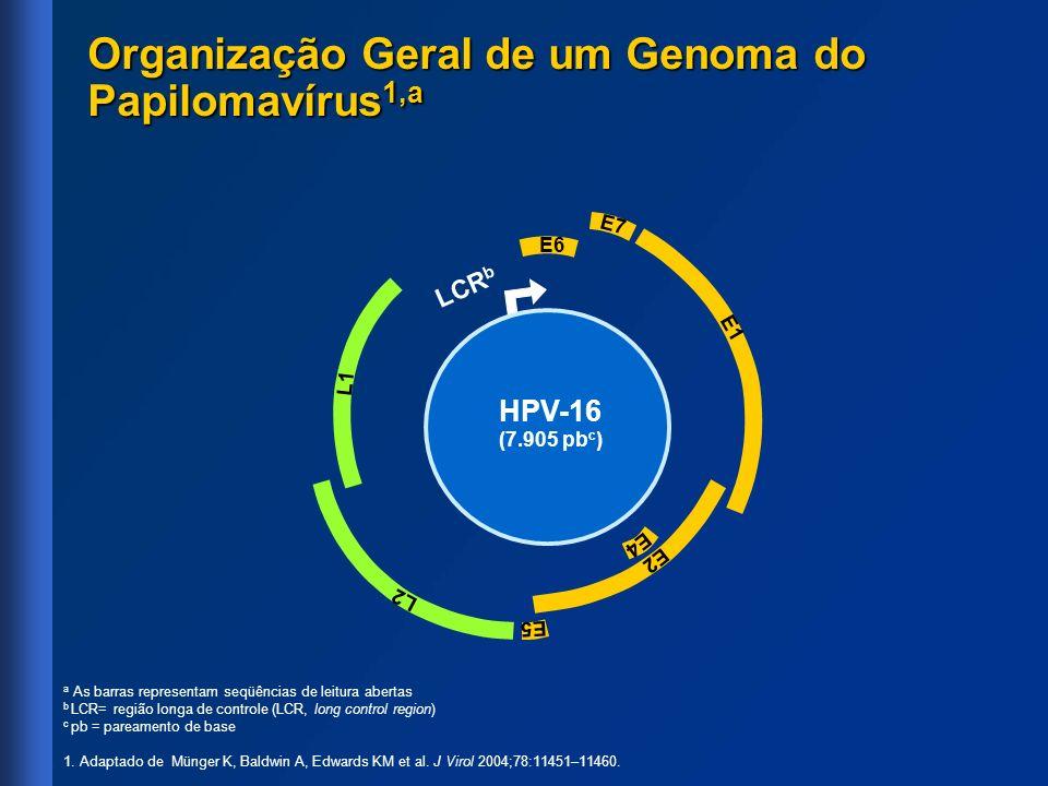 Organização Geral de um Genoma do Papilomavírus 1,a a As barras representam seqüências de leitura abertas b LCR= região longa de controle (LCR, long c