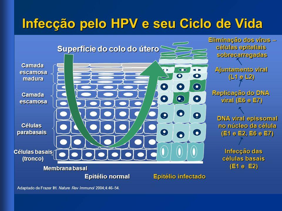 Eliminação dos vírus – células epiteliais sobrecarregadas Infecção pelo HPV e seu Ciclo de Vida Epitélio normal Superfície do colo do útero Membrana b